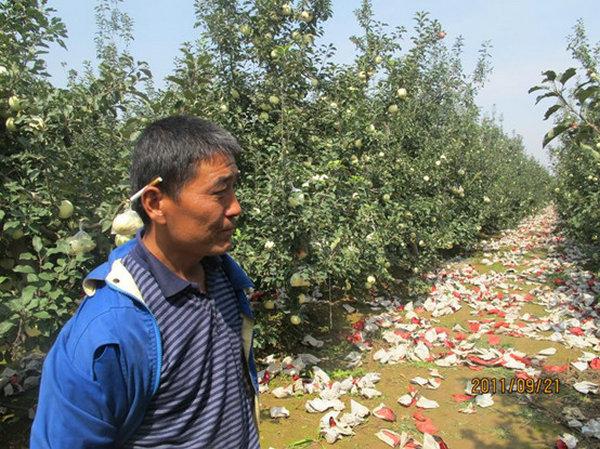 中科苹果主要病虫害综合防治实用技术手册