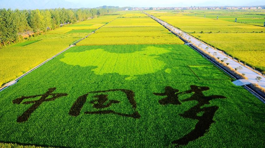 双苏中国梦A6